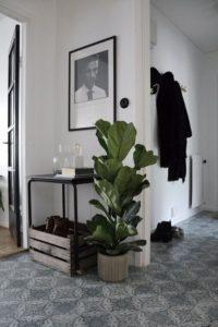 живые растения в коридоре