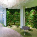 декоративный зеленый мох