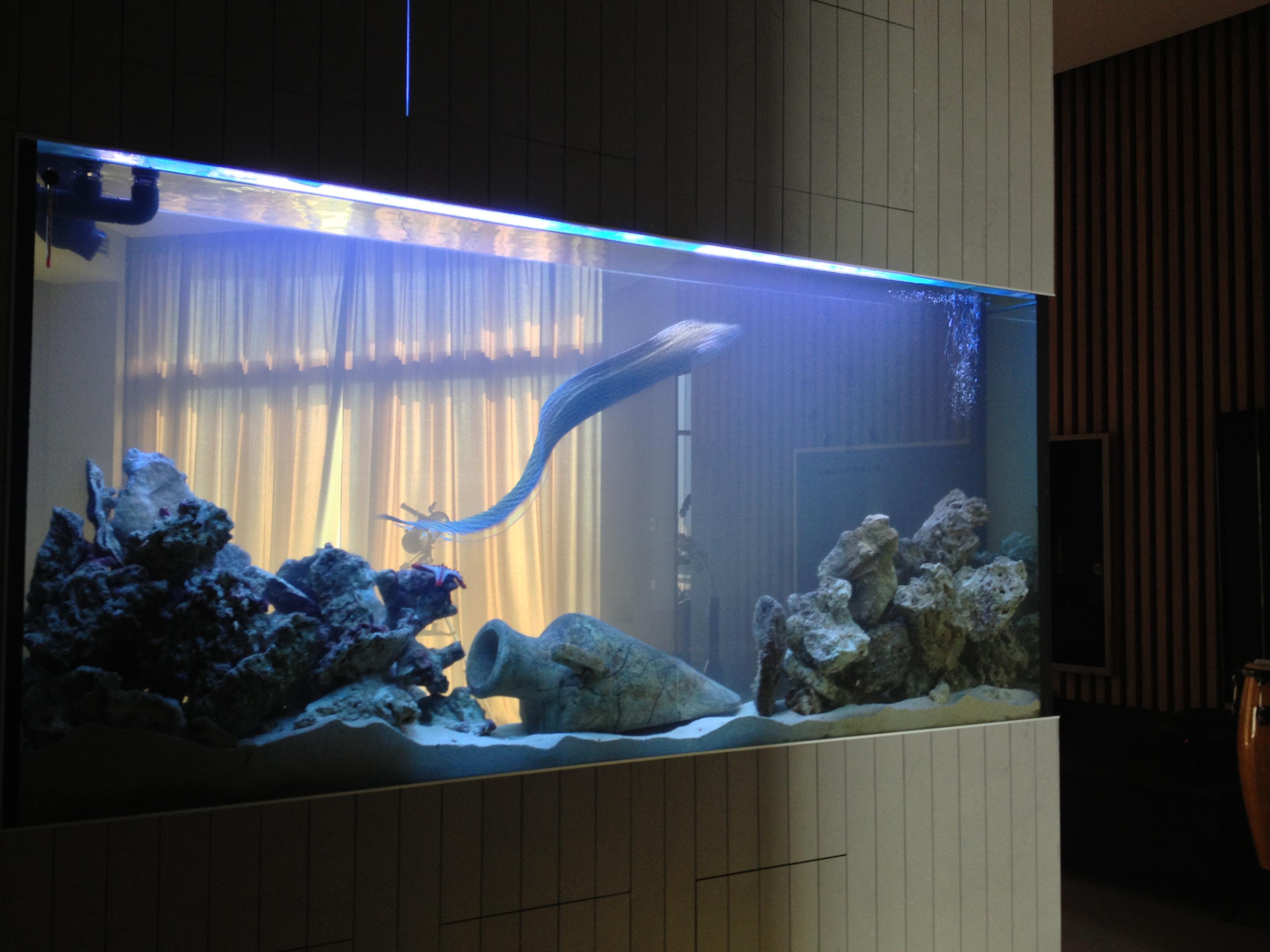 Большой аквариум в доме