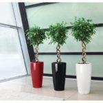 переплетающиеся растения