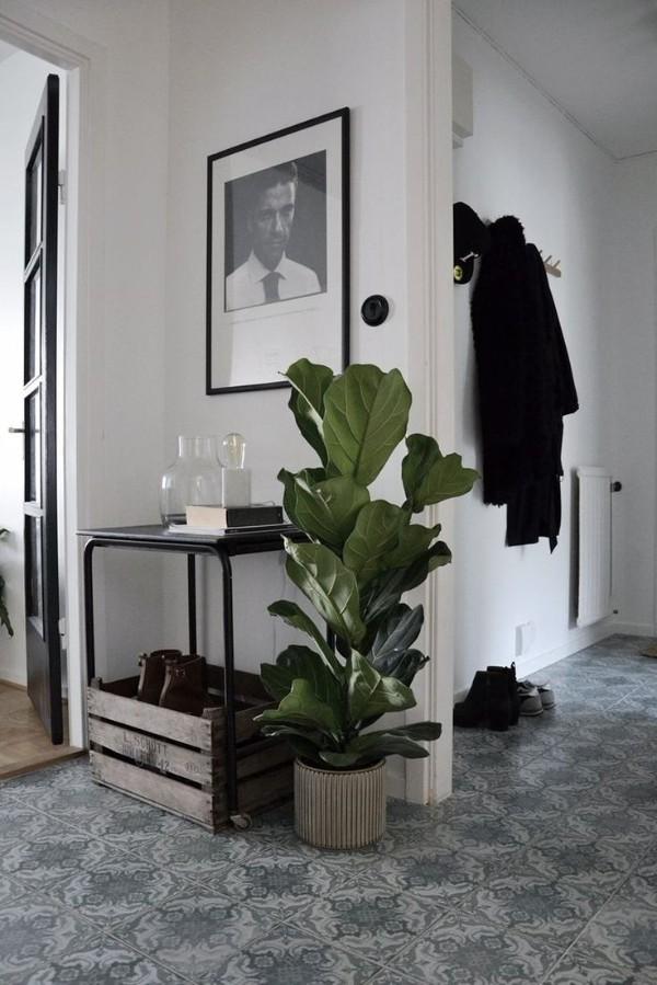 растения с крупными листьями