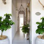 коридор с растениями