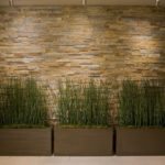 растения на фоне кирпичной стены
