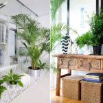 вечнозеленые растения в прихожей